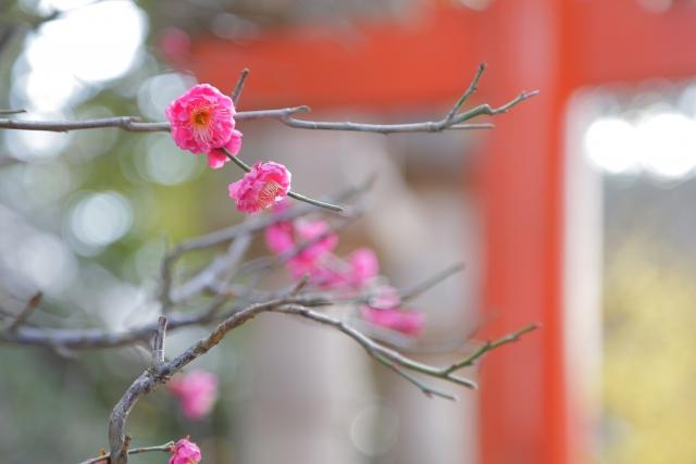 株式会社ジャストライト浪岡智がお送りする霧島神宮のお話のイメージ画像