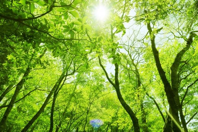 株式会社ジャストライト浪岡智がお送りする森林浴のイメージ画像