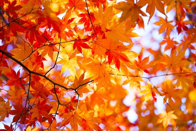 株式会社ジャストライト浪岡 智がお送りする宮崎県延岡市にある「鹿川渓谷」についてのイメージ画像