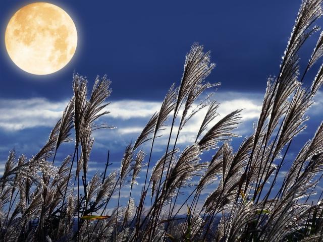 株式会社ジャストライト浪岡 智がお送りする福岡県朝倉郡の「夜須高原(やすこうげん)のススキ野原」についてのイメージ画像