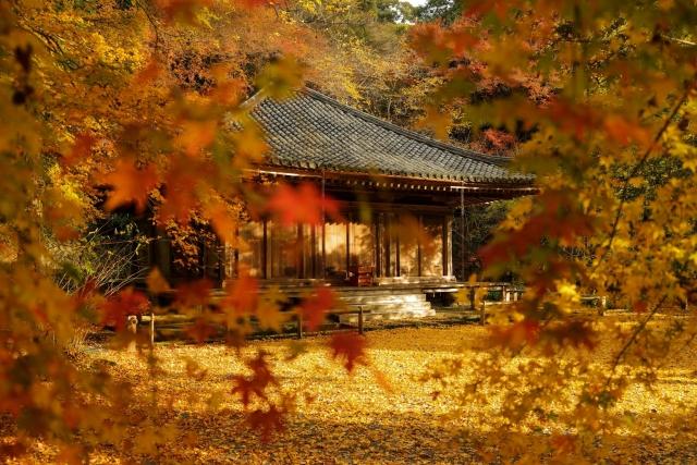 株式会社ジャストライト浪岡 智がお送りする「九州の紅葉」についてのイメージ画像