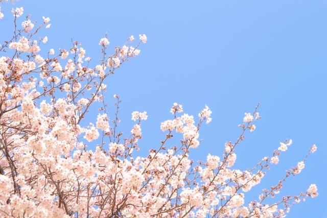 株式会社ジャストライト/浪岡 智/おすすめレジャー情報139 /~2021年第一回桜開花予想~