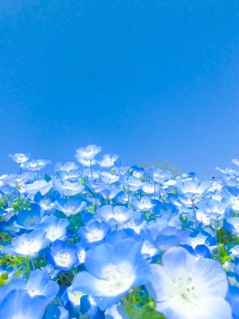 株式会社ジャストライト浪岡 智がお送りする福岡県の「海の中道 フラワーピクニック2021」についてのイメージ画像